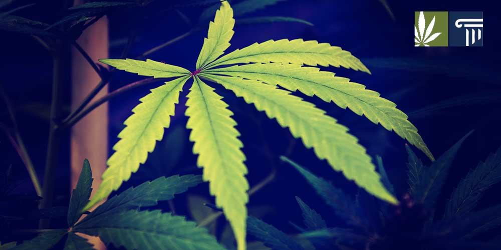 Wyden-McConnell-encourage-hemp-legalization-implementation