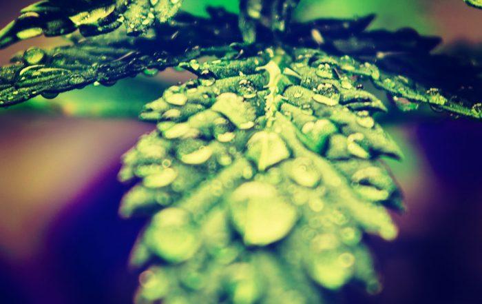 virginia marijuana legalization