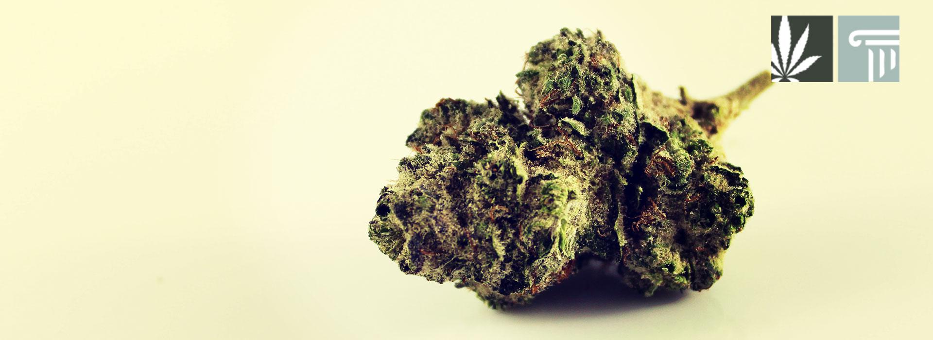 Pennsylvania medical marijuana employer tips