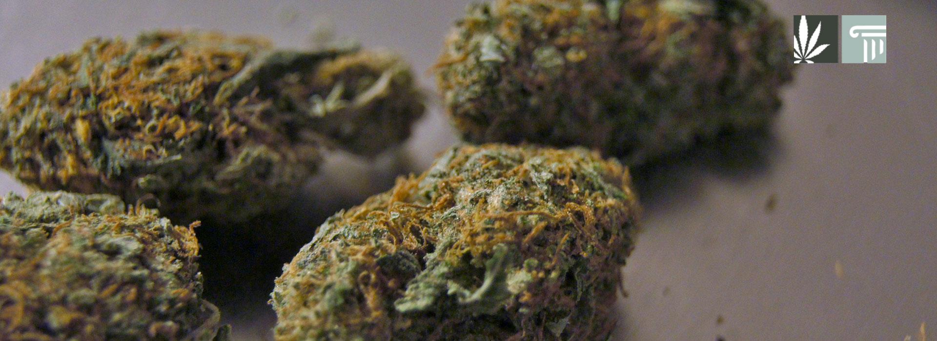 Federal bill learn from legal marijuana states