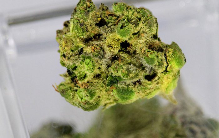 Tennessee medical marijuana program expansion