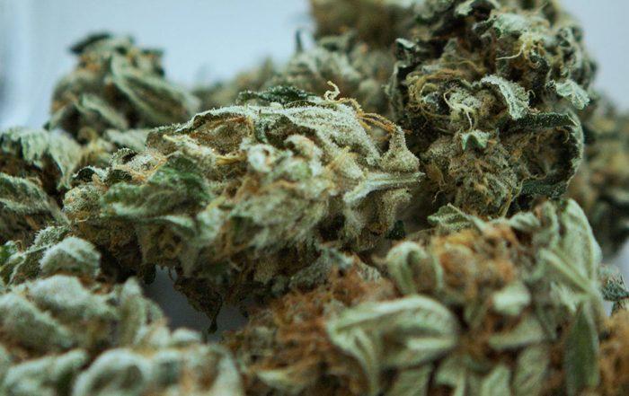 texas marijuana reform bills