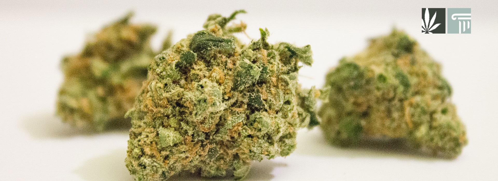 Marijuana legal new mexico