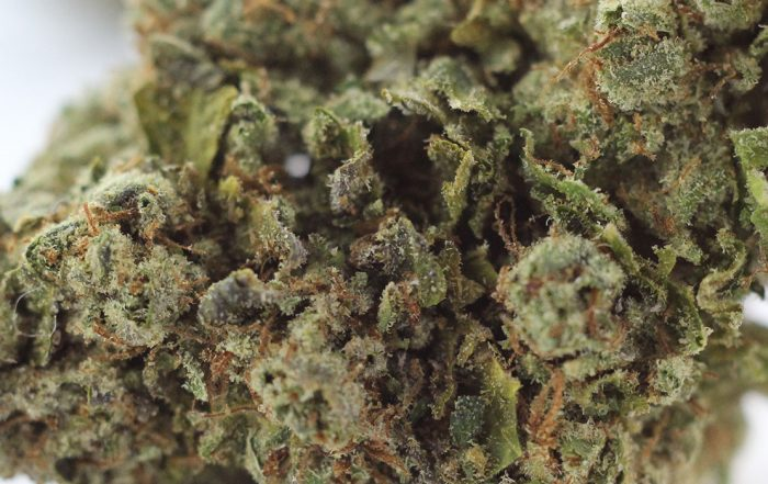 Montana legalizes marijuana