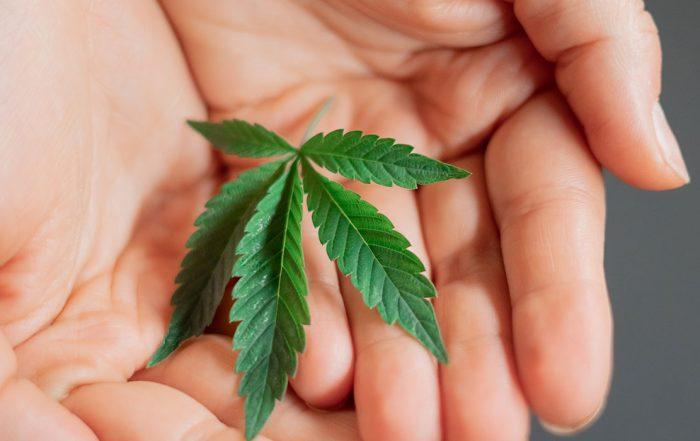 Rhode Island Cannabis Legalization