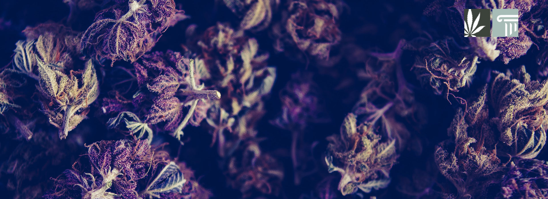 virginia marijuana possession decriminalized 1 pound