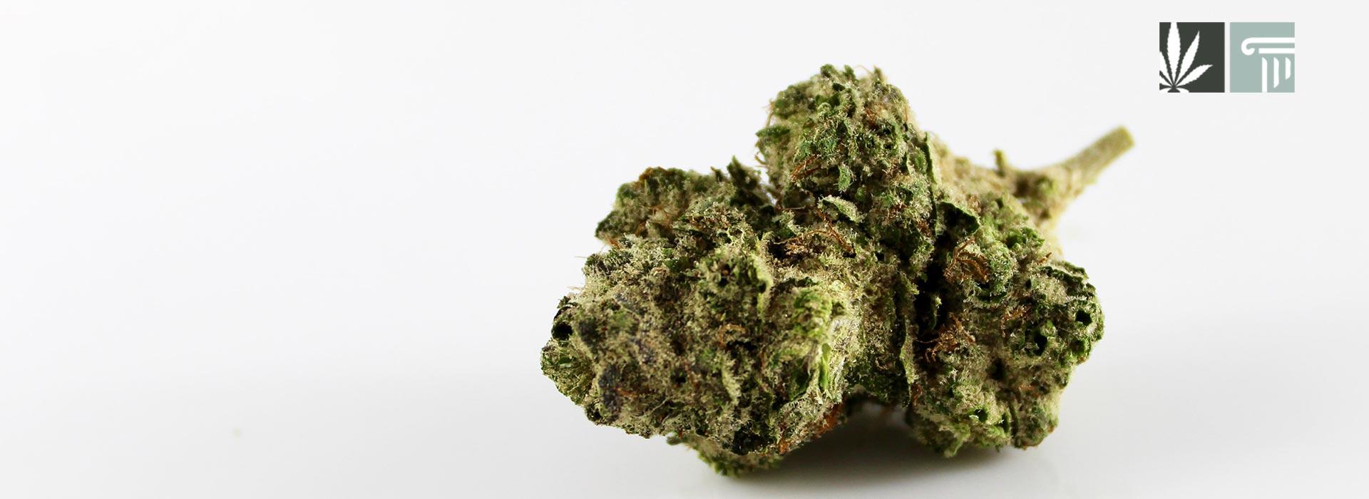 north carolina legalize medical marijuana