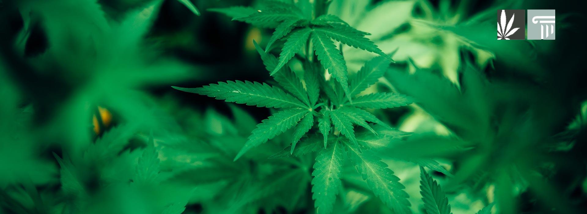 norml feedback federal legalization legislation